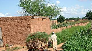 16% of Malians affected by food insecurity - UN Agency