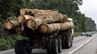 China behind illegal logging in the Congo Basin - Greenpeace