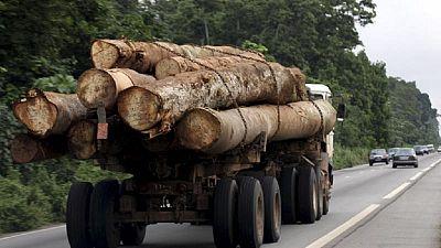 Bassin du Congo: la Chine accusée de favoriser l'exploitation illégale du bois