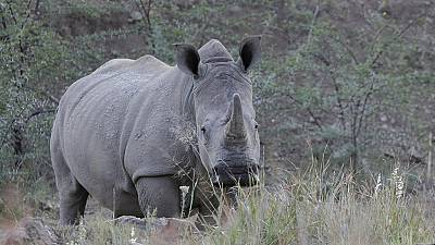 South Africa's rhino poaching declines in first quarter of 2016