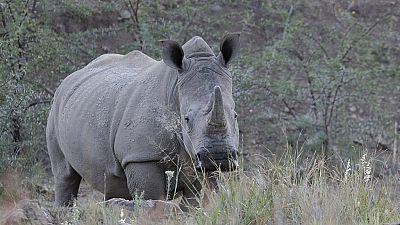 La question de la lutte contre le braconnage des rhinocéros en Afrique du Sud