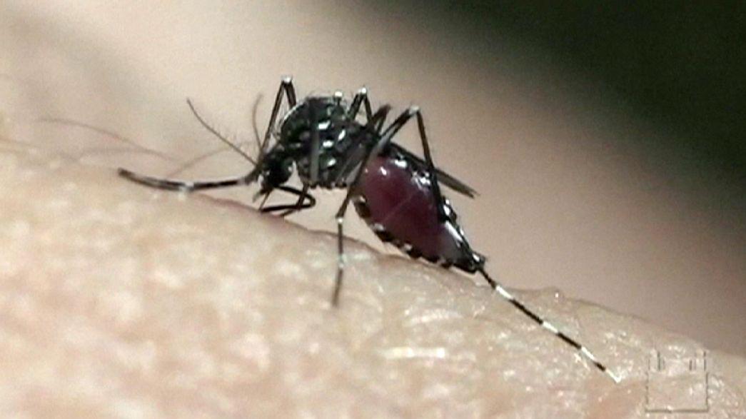 بعوض معدل جينيا لمكافحة فيروس زيكا