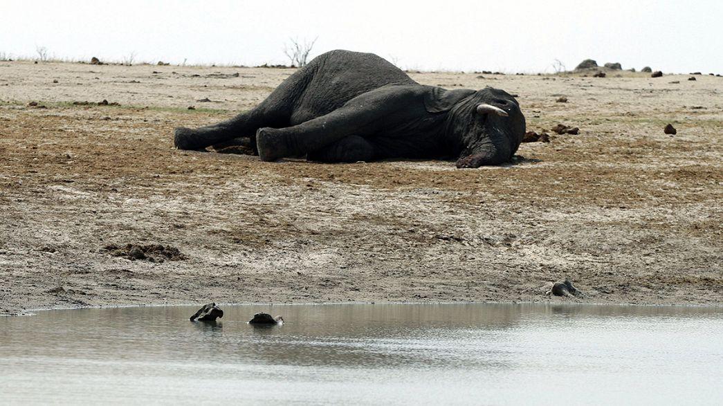 À vendre : éléphants et lions cause sécheresse