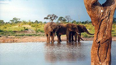 Zimbabwe : échaudées par les effets de la sécheresse, les autorités vendent les animaux des parcs nationaux