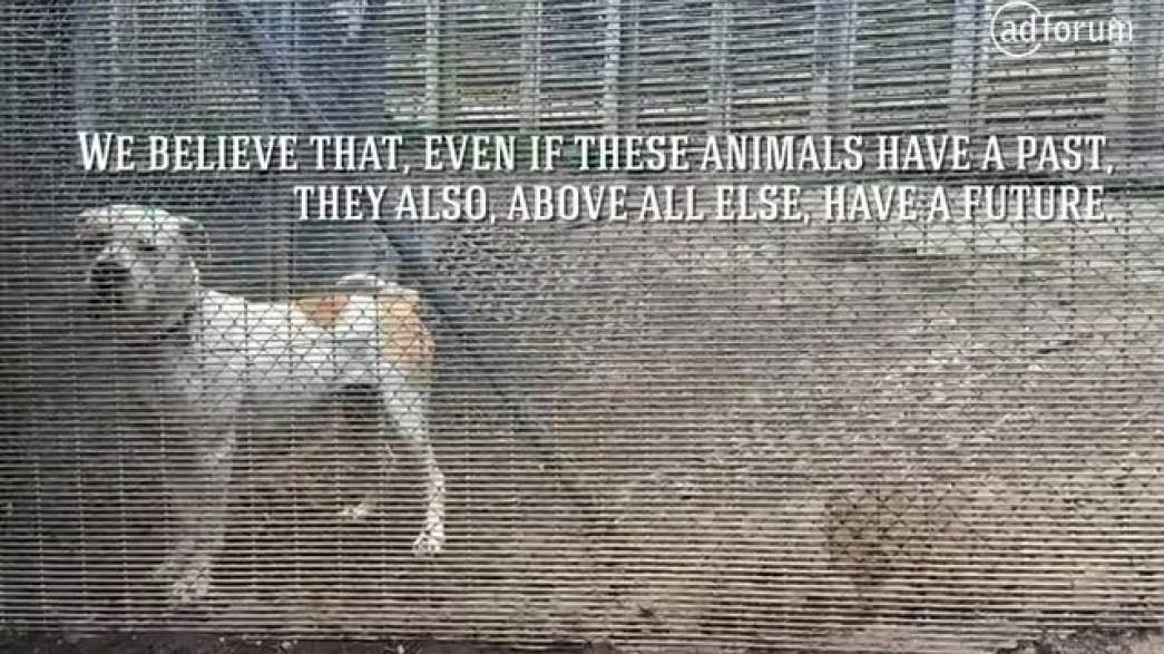 A voice for a future (SPCA)