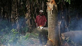 EU and FAO set up joint effort to combat illegal logging