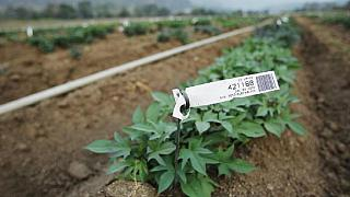 Zimbabwean academics revive 'dead' farmland in South Africa