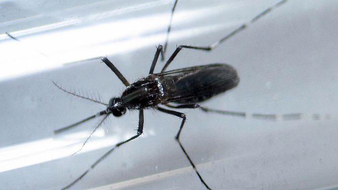 """Dünya Sağlık Örgütü'nden """"Zika uyarısı"""""""