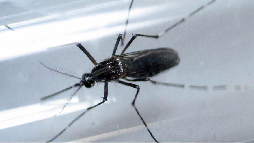 Zika: OMS rejeita adiar JO do Rio mas deixa aviso a atletas