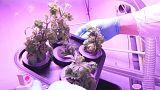 Tomatenzucht im Weltall - und Luft von Algen