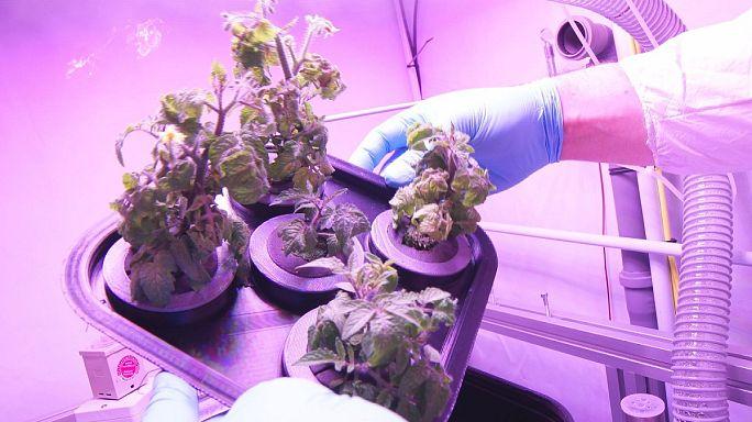Uzayda bitki yetiştirmek mümkün mü?