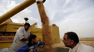 Egypte: nouvelle loi dans le secteur du blé