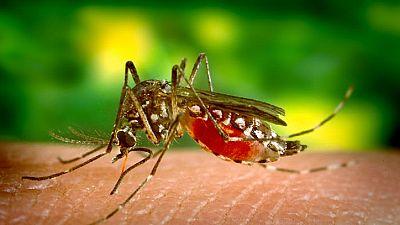Fièvre jaune : la Croix-Rouge met en garde contre les risques d'expansion internationale de l'épidémie