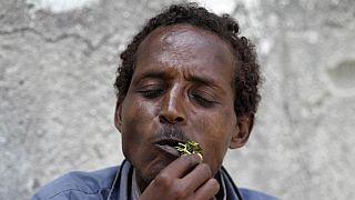 Herbal stimulant, khat derailing Djibouti's economy