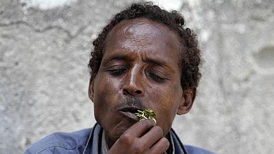A la découverte du khat, la petite plante qui dope l'économie à Djibouti