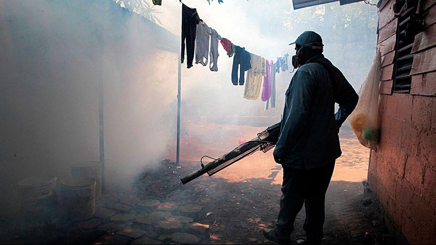 Zika auf den Kapverdischen Inseln nachgewiesen