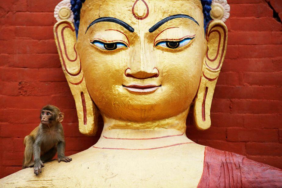 Célébrations de Bouddha