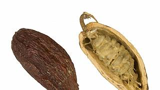Togo: le chocolat 100 % bio, qui ne fond pas