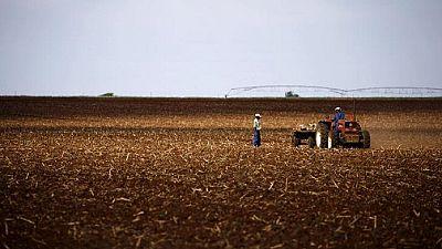 Afrique du Sud: vers une réforme agraire