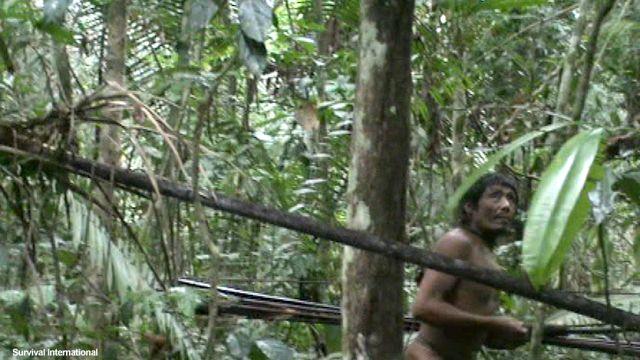 Amazon'un son yerlileri topraklarında yaşamak için direniyor