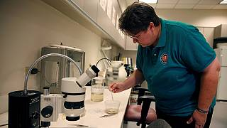 Brazilian scientists reveal Aedes aegypti mosquito as vector for Zika virus