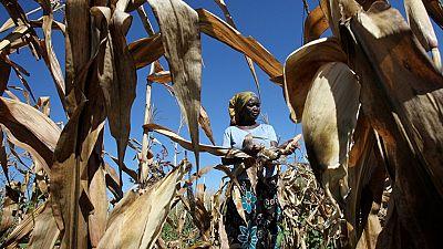 Zimbabwe : des données satéllitaires pour aider les agriculteurs face à la sècheresse