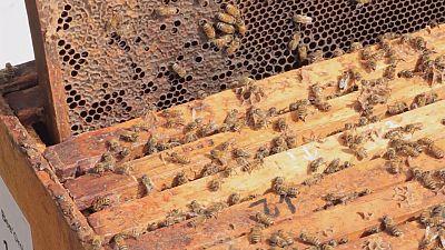 A la recherche de la super abeille!
