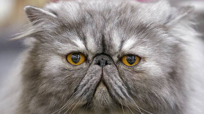 "Saudi cleric issues ""Catwa"" ban on cat selfies"