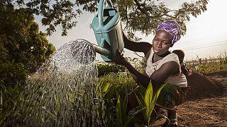 Prévisions alimentaires mondiales d'ici 2050