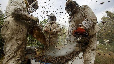 Des solutions pour sauver les abeilles du risque de disparition