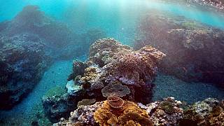 "La ""muerte blanca"" acecha la Gran Barrera de Coral australiana"