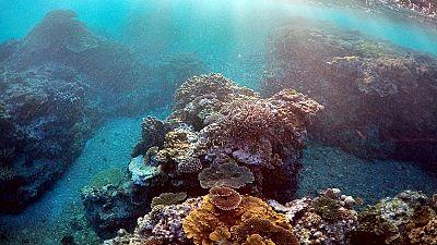 خطر از بین رفتن دیواره مرجانی در اقیانوس آرام