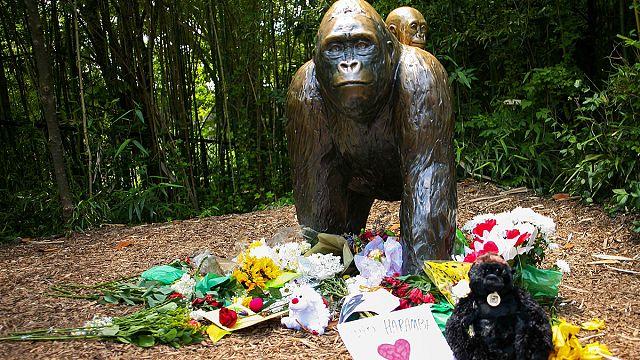 Американцы подписываются в защиту убитой гориллы