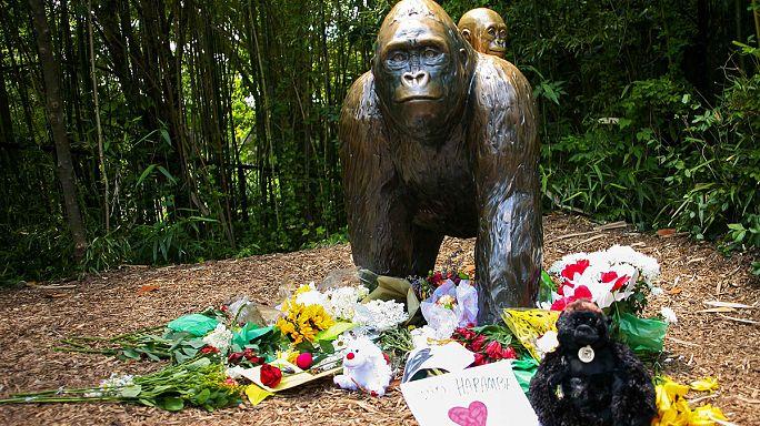 Sokan tiltakoznak az Ohióban kilőtt gorilla miatt