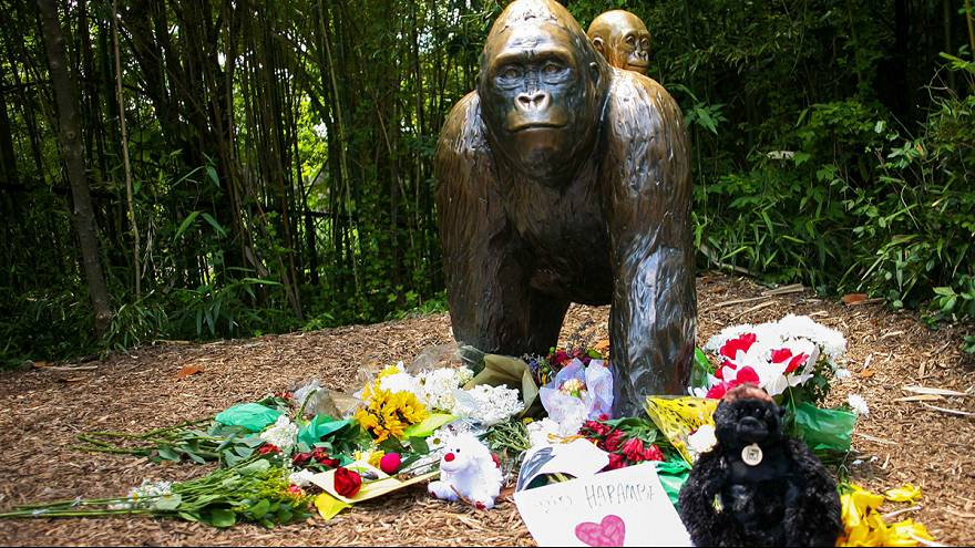 Shooting of Zoo's gorilla sparks online protest