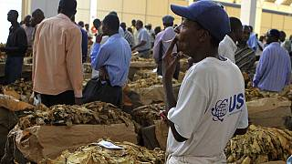 Zimbabwe tobacco farmers oppose WHO's plain packaging campaign