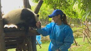 Michelle Yeoh visita a los osos panda