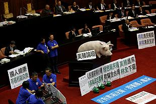Pig in a parliament