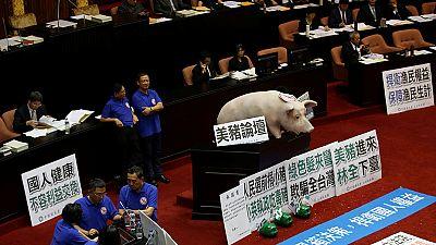 Schwein im Parlament