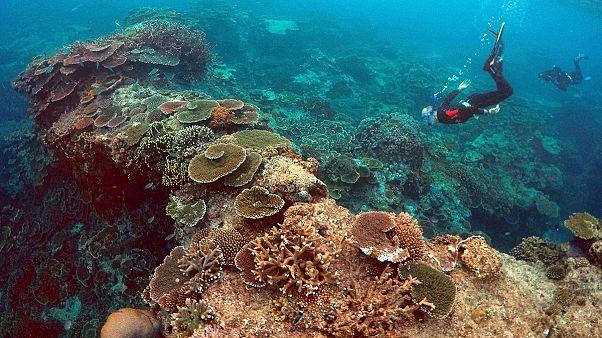 Miért fontosak a korallzátonyok az emberiség számára?