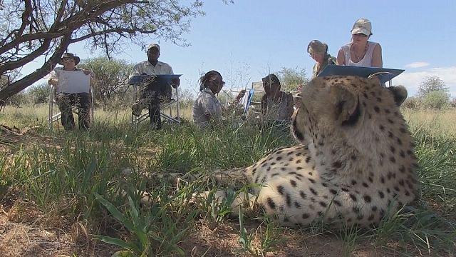 Safari turunu sanata dönüştüren turistik bir seyahat