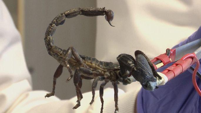 Mikroplara karşı akrep ve örümcek zehri