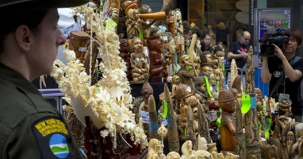 Etats unis braconnage interdiction quasi totale du - Comment reconnaitre de l ivoire ...