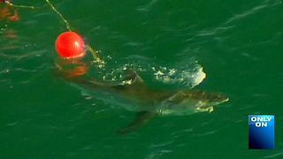 اسماك القرش تقتل سيدة عند سواحل بيرث الاسترالية بعد يومين فقط من مقتل شاب بحادث مماثل