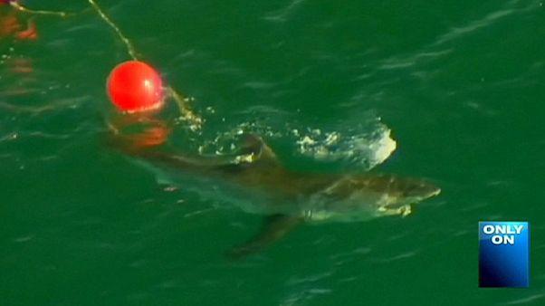 Australia vive el segundo ataque mortal de un tiburón en menos de una semana