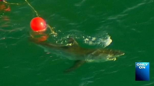 Diver's death treated as second 'fatal shark incident' near Perth in a week