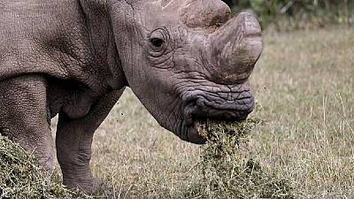 Hope for 'Hope,' the South African rhino attacked by poachers