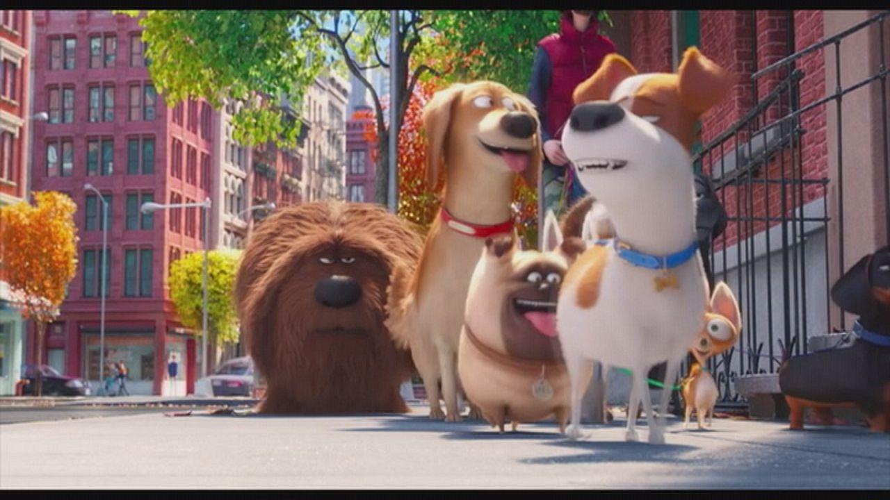 ¿Qué hacen tus mascotas cuando no estás en casa? una película de los creadores de Gru, mi villano favorito