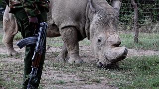 Angolan rangers combating wildlife poachers