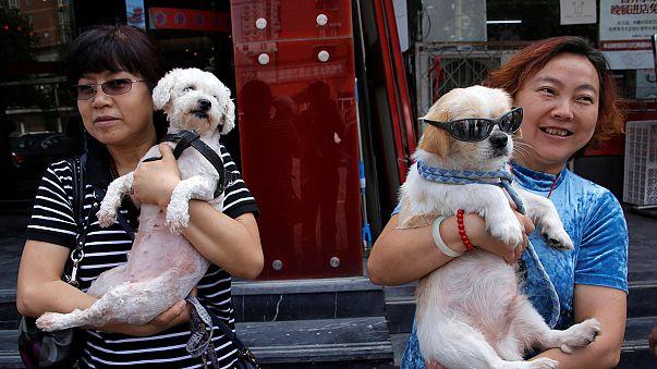 Mentik a kutyákat kínai állatvédők